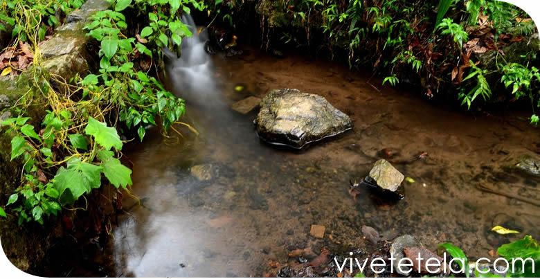 Tetela de Ocampo y su biodiversidad
